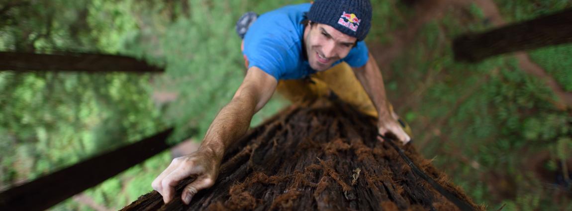 Giant Ascent: Chris Sharma Free Climbs a Redwood Tree