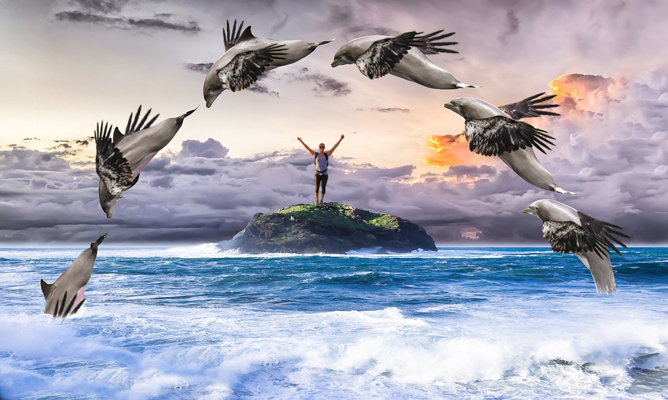 Soaring through the Rainbow Nation with a Dolphin-Eagle
